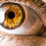 Янтарный цвет глаз