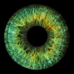 Мышцы, которые изменяют размер зрачка