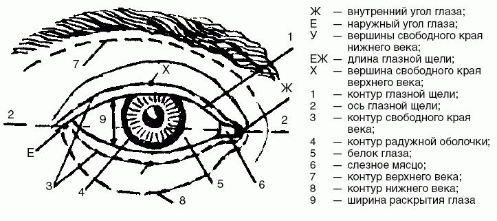Наружный и внешний угол глаза - фото