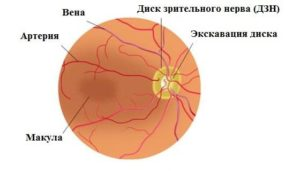 Что такое экскавация диска зрительного нерва
